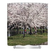 Japanese Cherry Blossom Trees Shower Curtain