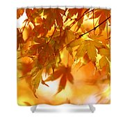 Japanese Maple In Fall Shower Curtain
