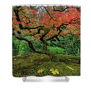 Japanese Maple Tree In Autumn Shower Curtain