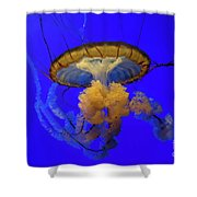 Jellyfish At California Academy Of Sciences In San Francisco, California Shower Curtain