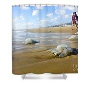 Jellyfish On The Beach  Shower Curtain