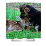 Julie Martinez Mittelwest Kennels Wonder Lake Shower Curtain