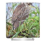 Juvenile Black-crowned Night Heron Shower Curtain
