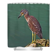 Juvenile Black Crowned Night Heron Shower Curtain