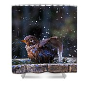 Juvenile Blackbird Shower Curtain