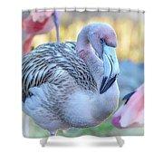 Juvenile Flamingo Shower Curtain