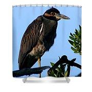 Juvenile Night Heron Shower Curtain