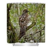 Juvenile Short-tailed Hawk Shower Curtain