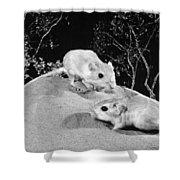 Kangaroo Rat Shower Curtain