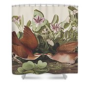 Key West Dove Shower Curtain