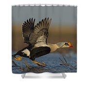 King Eider Shower Curtain