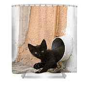 Kitten In A Pipe Shower Curtain