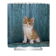 Kitten On A Greek Island Shower Curtain