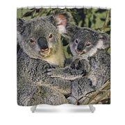 Koala Phascolarctos Cinereus Mother Shower Curtain by Gerry Ellis