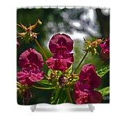 Lady Slipper Orchid Dan146 Shower Curtain