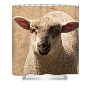 Lamb Looking Cute. Shower Curtain