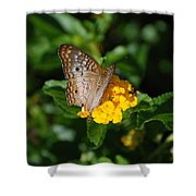 Landed Shower Curtain