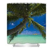 Lanikai Palm Tree Shower Curtain