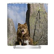 Lapinko�ra Dog And His Pup Shower Curtain