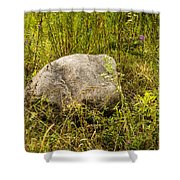 Large Rock And Purple Asters Shower Curtain