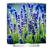 Lavander Flowers In Lavender Field Shower Curtain