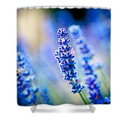 Lavander Flowers With Bee In Lavender Field Artmif Shower Curtain by Raimond Klavins