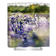 Lavender Purple Flower Blooming On Side Road In Texas At Sunset Shower Curtain