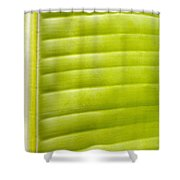 Leaf Close-up Shower Curtain