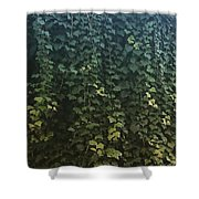 Leaf Of The Ivy   Shower Curtain