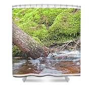 Leaning Tree Trunk By A Stream Shower Curtain