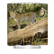 Leopard In The Forest Shower Curtain