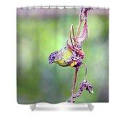 Lesser Goldfinch 4052 Shower Curtain