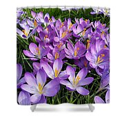 Let It Spring Shower Curtain
