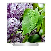 Lilac Drops Shower Curtain