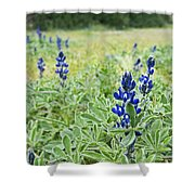 Lilac Flower In Green Canvas Spring Has Arrived 1 Shower Curtain