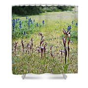 Lilac Flower In Green Canvas Spring Has Arrived 2 Shower Curtain