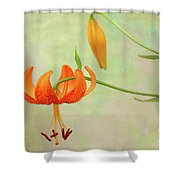 Lilium Pardalinum Shower Curtain
