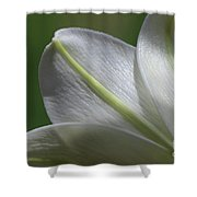 Lily Light Falls Shower Curtain