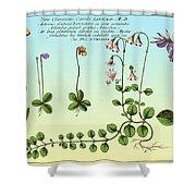 Linnaea Borealis, Linnaeuss Favorite Shower Curtain