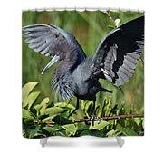 Little Blue Heron Shower Curtain