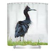 Little Blue Heron Portrait Shower Curtain
