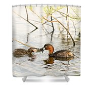 Little Grebe Tachybaptus Ruficollis Shower Curtain