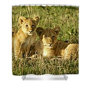Little Lions Shower Curtain