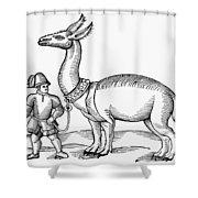 Llama, 1607 Shower Curtain