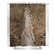 Log In The Woods Shower Curtain
