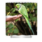 London Parakeet Shower Curtain