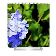 Lone Ant In A Big World Shower Curtain