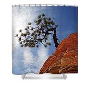 Lone Bonsai Tree In Zion Shower Curtain