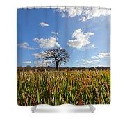 Lone Oak Tree In Wheat Field Shower Curtain