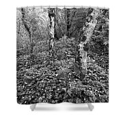 Lone Ranch Wood 4937 Shower Curtain